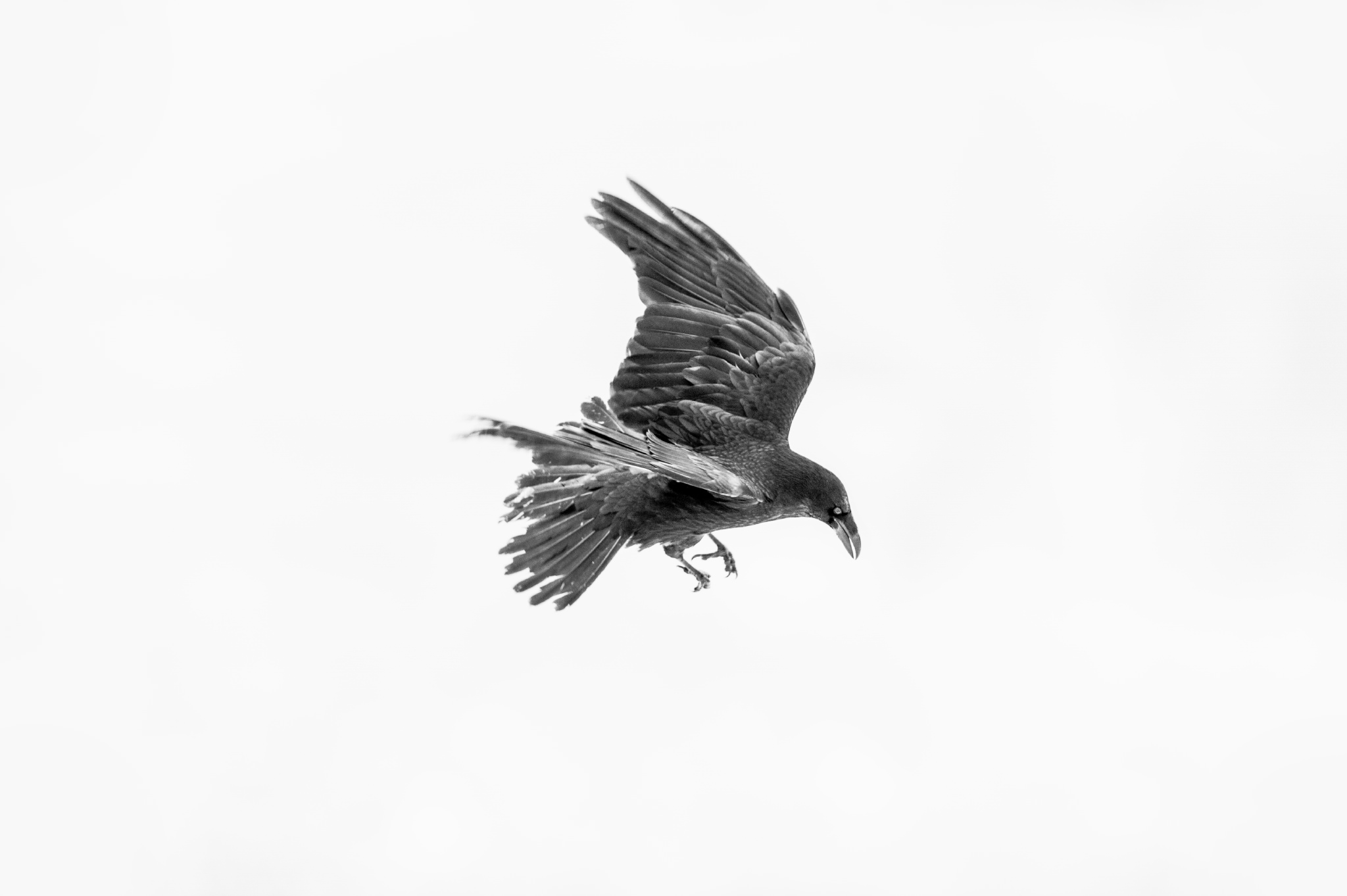 Radek kazmierczak fotografia przyrodnicza bieszczady ptaki zdjecia na sciane bieszczady obrazy wall decor zdjecia ramce na sciane bieszczady photogrpahy zakup kupno kupie
