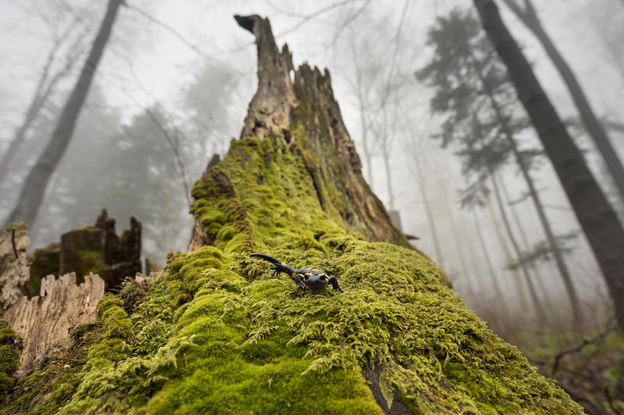 radek kazmierczak fotografia przyrodnicza bieszczady zdjecia na sciane obrazy (1)